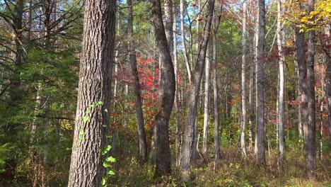 Tennessee-Vorbei-An-Bäumen-In-Cades-Cove