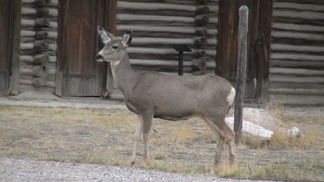 Wyoming-Fort-Casper-Y-Ciervos