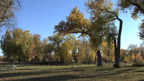 Wyoming-Fort-Laramie-park-trees
