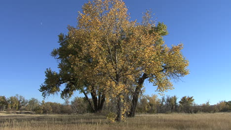 Wyoming-Otoño-árboles-Cielo-Azul
