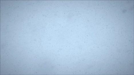 Snowy-Skies