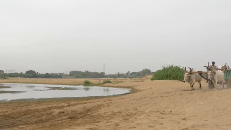 Trichy-Karnataka-Indien-07-Juli-2019-Ochsenkarren-Die-Einen-Kleinen-Bach-Im-Cauvery-Flussbecken-In-Trichy-überqueren-Um-Sand-Für-Den-Hochbau-Auszugraben