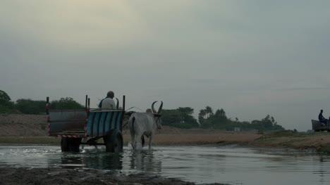 Ochsenkarren-Die-Einen-Kleinen-Bach-Im-Cauvery-Flussbecken-In-Trichy-überqueren-Um-Sand-Für-Den-Hochbau-Auszugraben