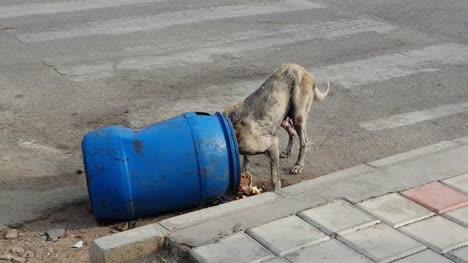 Ein-Kranker-Streunender-Hund-Der-Auf-Der-Straße-Aus-Einer-Mülltonne-Frisst