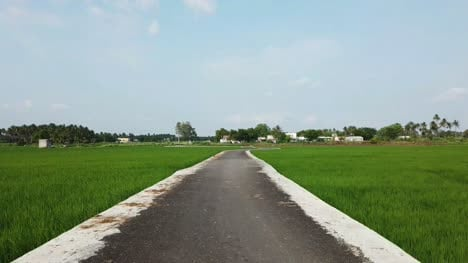 View-of-a-beautiful-road-through-a-lush-green-paddy-field-on-a-bright-day