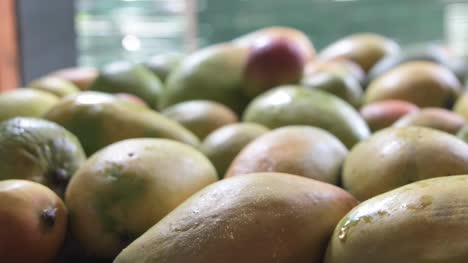 Dolly-in-and-closeup-of-a-person-picking-up-a-red-mango-from-a-pile-of-mangoes