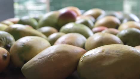 Dolly-in-and-closeup-of-person-picking-up-red-mango-from-pile-of-mangoes