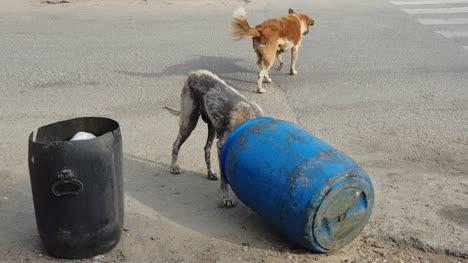 Un-Perro-Callejero-Enfermo-Comiendo-De-Un-Cubo-De-Basura-En-El-Camino