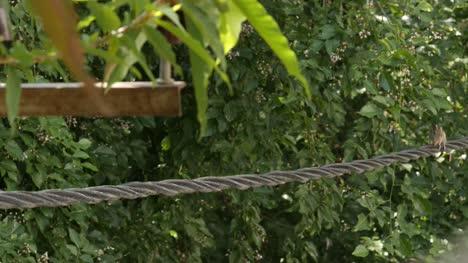 Nahaufnahme-Eines-Indischen-Palmhörnchens-Oder-Drei-Gestreiften-Palmhörnchens-Das-Tagsüber-Auf-Einem-Elektrischen-Kabel-Läuft-