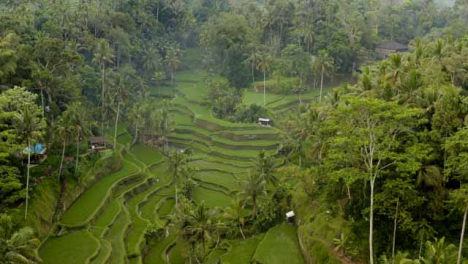 Drone-Shot-Flying-Over-Ubud-Tegallalang-Rice-Terraces