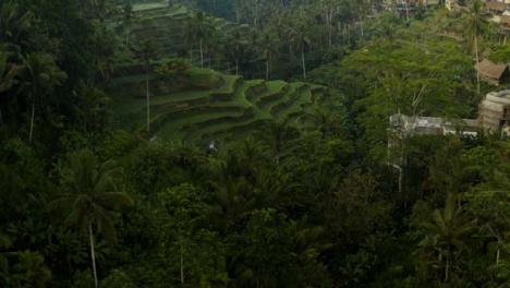 Drone-Shot-Flying-Towards-Tegallalang-Rice-Terraces
