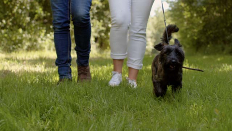 Kamerafahrt-Nach-Dem-Spaziergang-Mit-Kleinem-Hund
