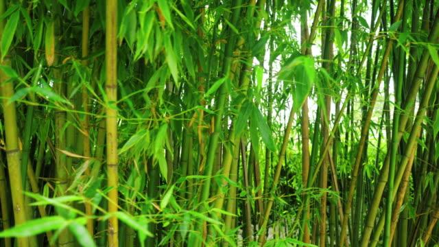 Bamboo-arashiyama-kyoto-japan-Bamboo-grove-in-the-forest-4k