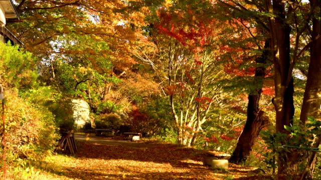 Park-der-Ahornbäume-Landschaft-windigen-Herbsttag-