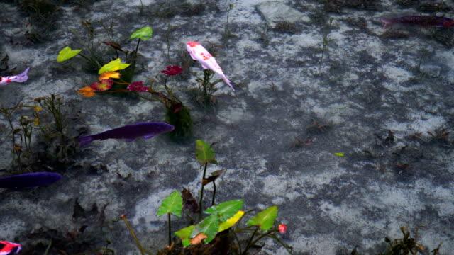 Carp-of-a-beautiful-pond