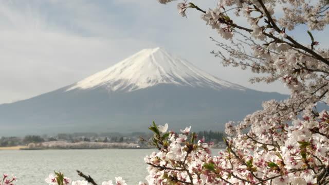 close-view-of-cherry-blossoms-and-mt-fuji-at-lake-kawaguchi-in-japan