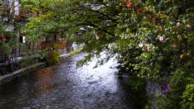 upstream-view-of-shirakawa-canal-at-gion-in-kyoto