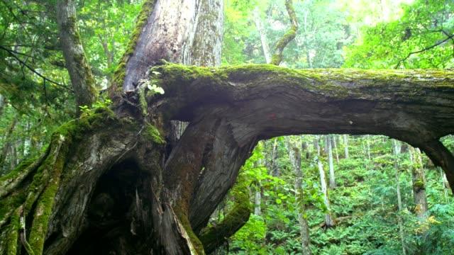 Big-forest-(Akan-National-Park)