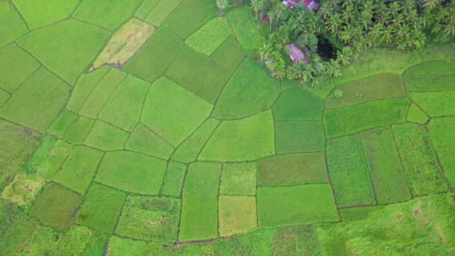 Rice-field-terrace-agriculture-land