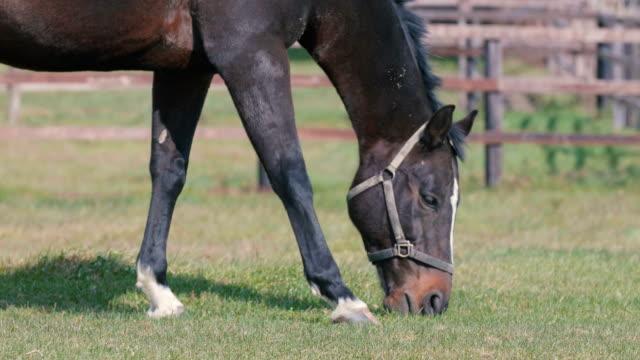 Thoroughbred-Horses-in-Niikappu-Hokkaido-Japan-Filmed-in-4K