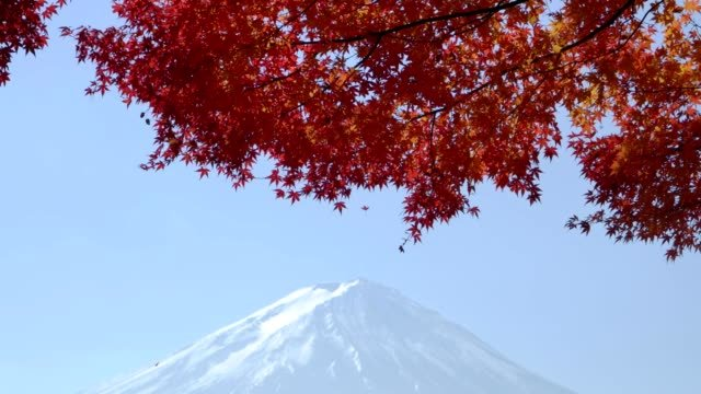 red-maple-leave-with-mt-fuji-in-autumn-season