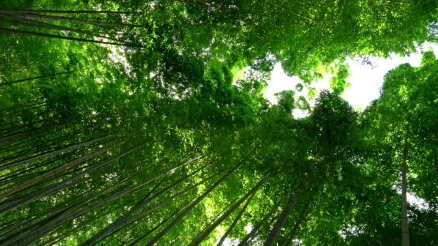 Looking-up-to-Bamboo-Groves-at-Arashiyama-Kyoto-Japan