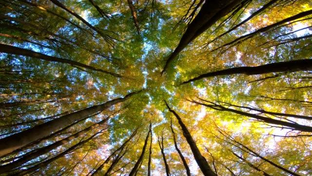 Bosque-de-hayas-bosques-de-hayas-fagus-rotación-gira-Buchenwald-laubwald-bosque-caducifolio-madera-hojas-de-haya-otoño-Spessart-Baviera-4K