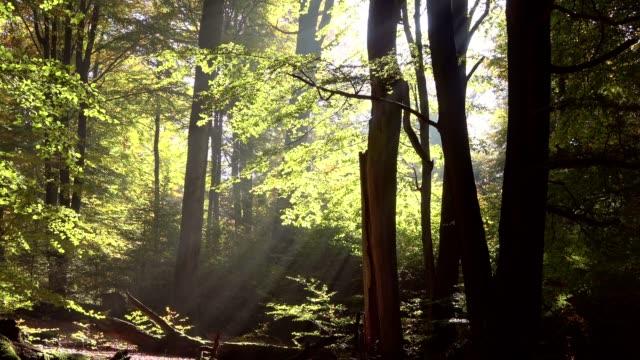 Dead-wood-oak-woods-oak-trees-quercus-fagus-beech-beech-forest-laubwald-deciduous-forest-wood-autumn-Spessart-bavaria-4K