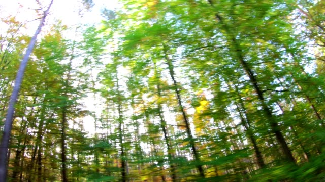 Beech-forest-videoeffect-art-Fahraufnahme-beech-woods-fagus-Buchenwald-laubwald-deciduous-forest-wood-beech-leaves-autumn-Spessart-bavaria-4K
