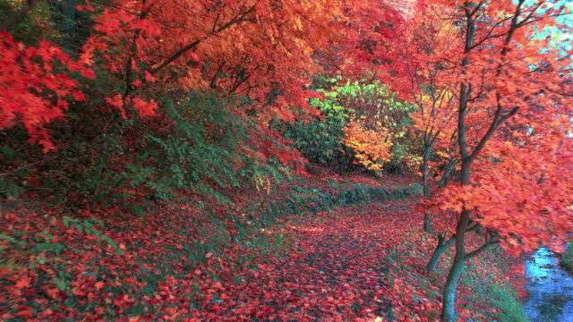 Advance-the-Forest-Road-in-the-Fallen-Leaves