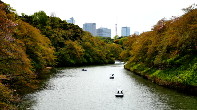 Travel-video-People-sitting-in-a-rowing-boat-and-the-cherry-blossoms-in-full-bloom-at-Chidorigafuchi-in-spring-season-Tokyo-Japan-
