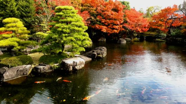 Schönen-japanischen-Garten-und-Koi-Fisch-in-Herbstsaison