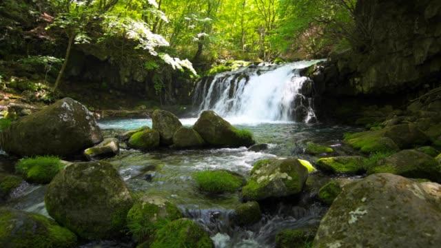 Wasserfall-und-frischem-Grün-in-japan