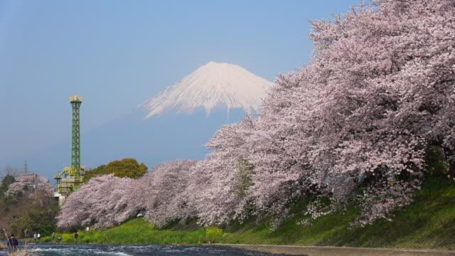 潤井川の桜と富士山