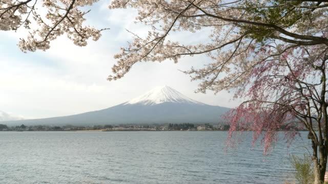zoom-in-clip-of-mt-fuji-and-lake-kawaguchi-with-flowering-sakura