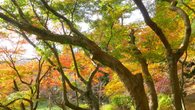 Bright-vibrant-autumn-leaves-swaying-in-wind