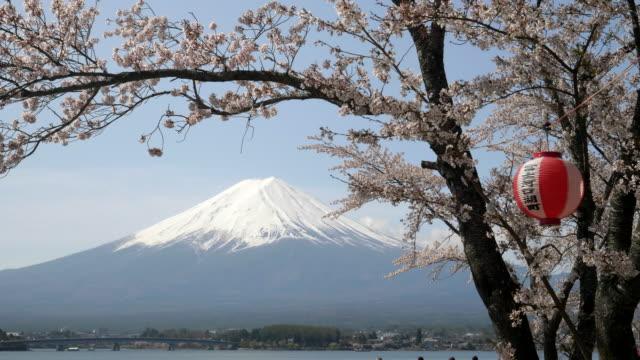 mount-fuji-and-a-cherry-tree-with-a-paper-lantern-at-kawaguchiko
