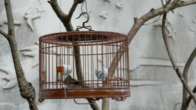 caged-bird-at-mongkok-markets-in-hong-kong