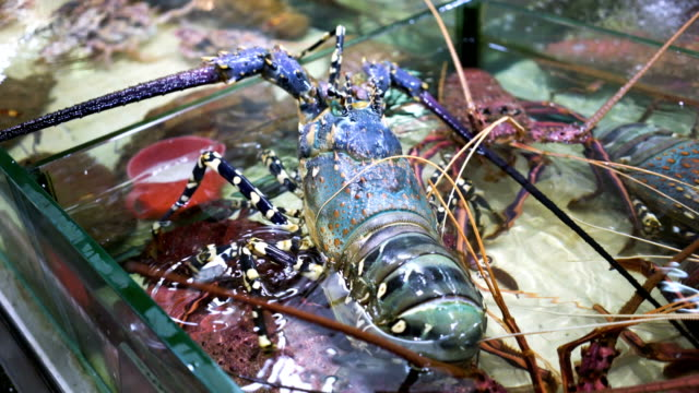Fresh-Lobster-in-Seafood-Market-