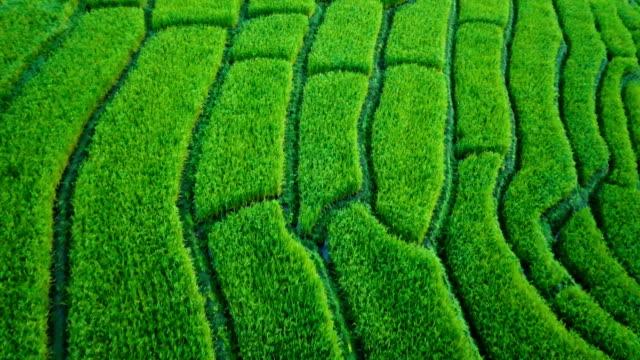 vista-aérea-de-Drone:-vista-del-hermoso-paisaje-de-terrazas-de-arroz