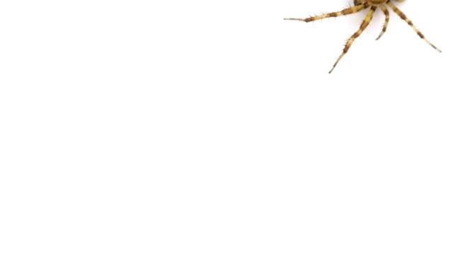 Unusual-logo-Spider-crawls-on-isolated-white-background
