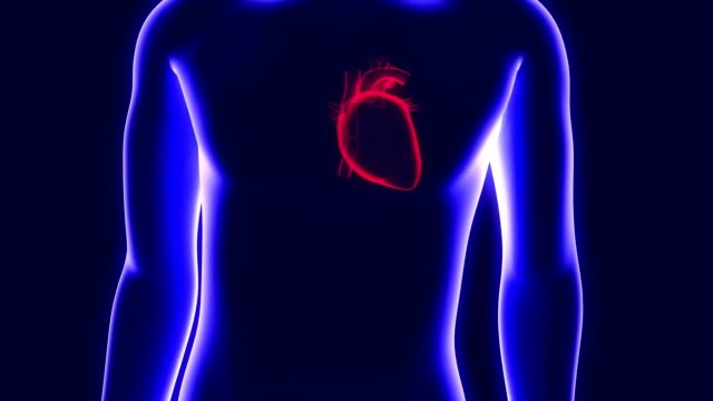 3D-Animation-von-ein-menschliche-Hologramm-und-ein-schlagendes-Herz