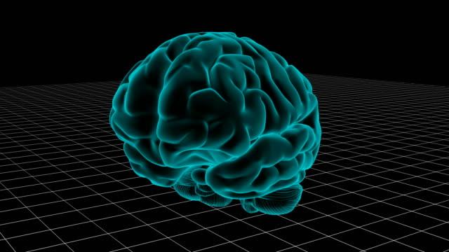 Human-brain-loop-