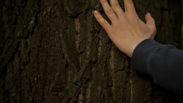 Mans-Hand-sanft-berühren-Baumstamm-Natur-und-Waldschutz-Ökologie-Pflege