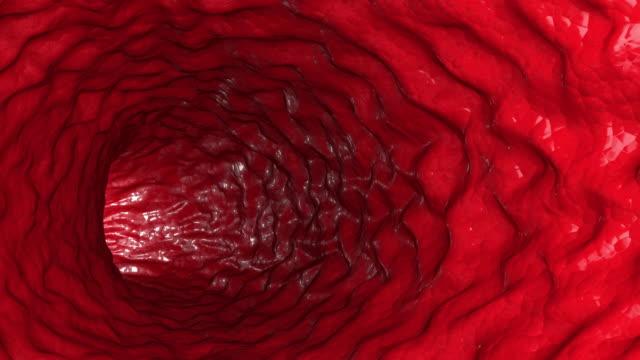 Human-internal-pipe-organs-intestines-medical-operation-