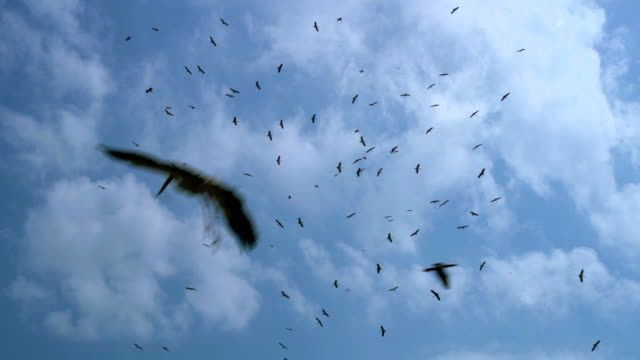 Pájaro-en-el-cielo