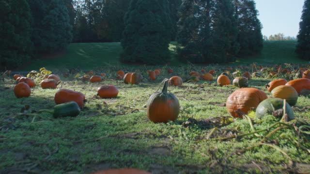 Patch-of-Rotten-Pumpkins