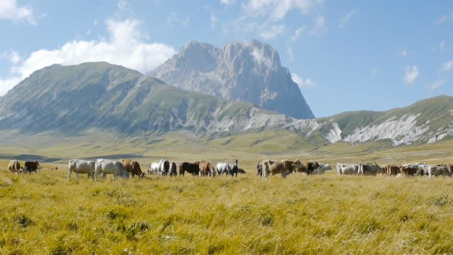 Ranch-animals-in-green-field-with-mountains