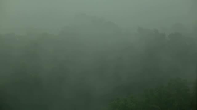 Viento-y-lluvia-sacude-los-árboles-Huracán-