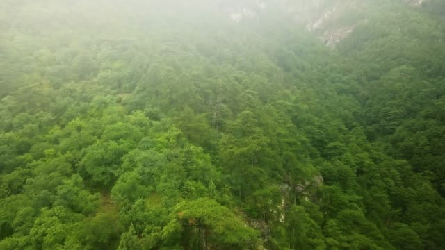 drone-flight-above-the-mountain-pine-wood-trees-on-a-stormy-rainy-day